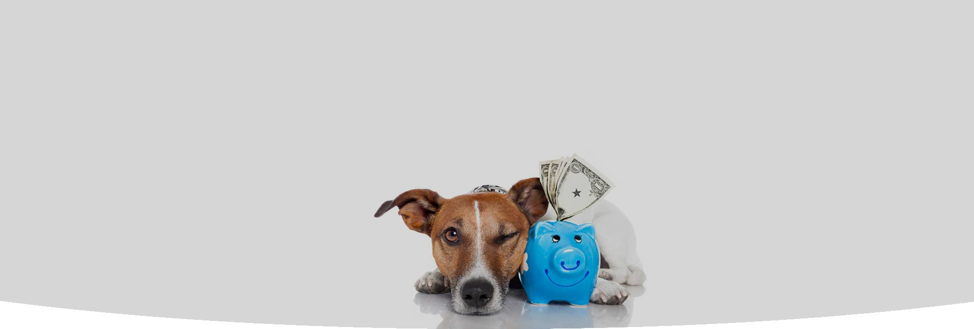 tarifs pension chien chat gers